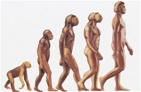 Human Evolution - free essay example EDULEARN14